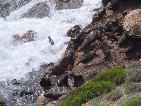 Plettenberg Bay, Sudáfrica: photo1.jpg