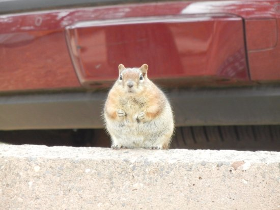 North Campground: We named this guy Sumo Squirrel because he was already SO fat.
