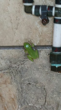 Frisco campground shower frogs