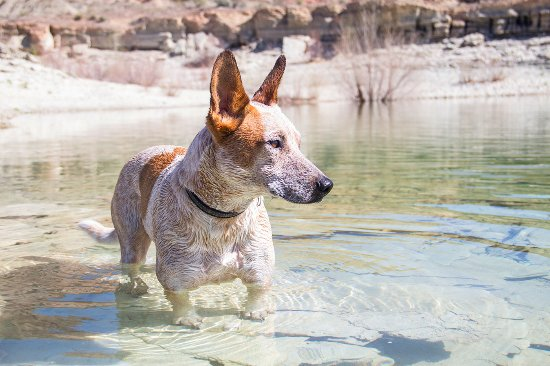 Dig Paddlesports: Pet-friendly shores across the lake!