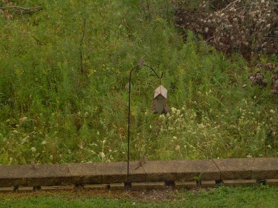 Country Inn & Suites By Carlson, Green Bay North: Birds and chipmunks
