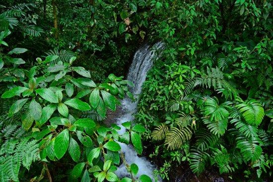 Chachagua, Kosta Rika: waterfall