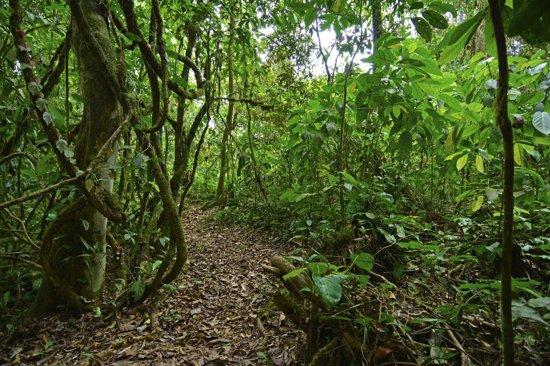 Chachagua, Kosta Rika: trail
