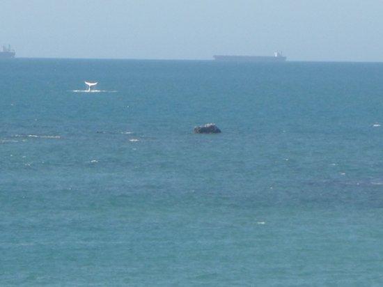 Point Samson, Australia: A whale from bar