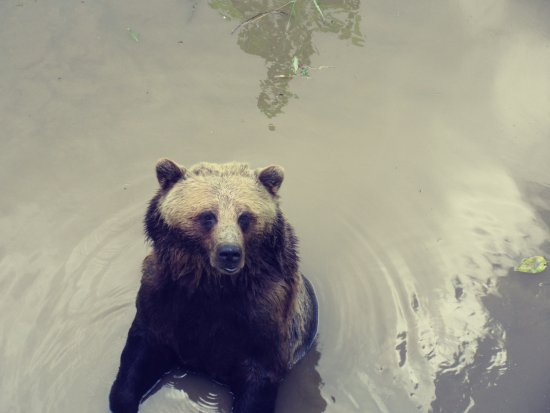 Greater Vancouver Zoo: Bear