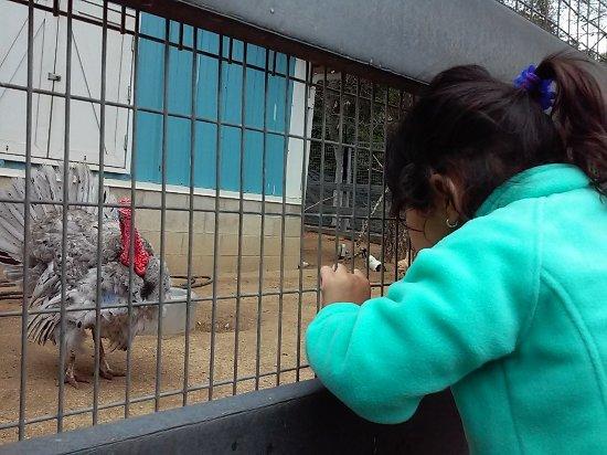 Santa Ana Zoo at Prentice Park : oh, look at the Turkey!