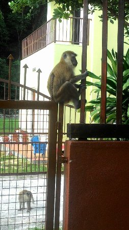 Nipah Bay Villa: Visitor at the gate