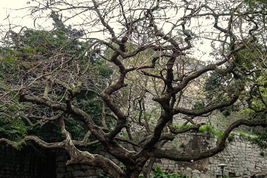 Old Gnarled Tree And Fort Picture Of Monte Forte