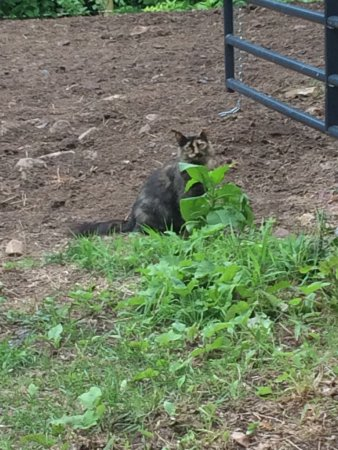 Mountain Laurel Riding Stable: The horses and cat