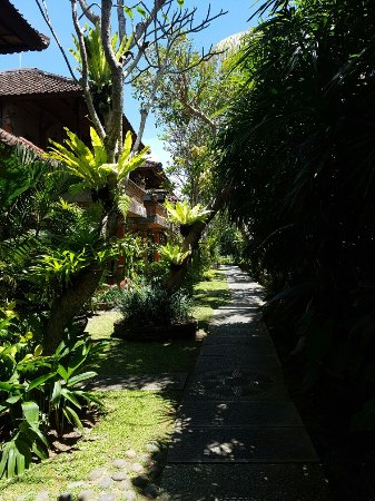 Ubud Bungalow: 20160911_114719_large.jpg