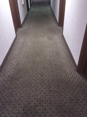 Baymont Inn & Suites Rockford : Spiders, Nasty carpet, Roaches, and cheap mattresses!!