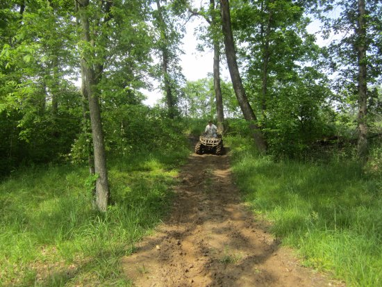 Canton, MO: Trail Through the Woods