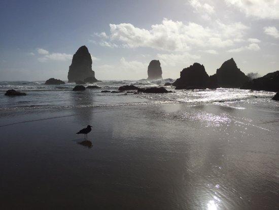 The Waves: photo1.jpg