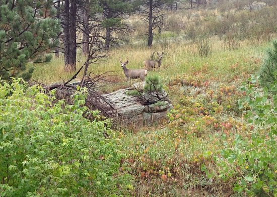Eldorado Canyon: Deers on path
