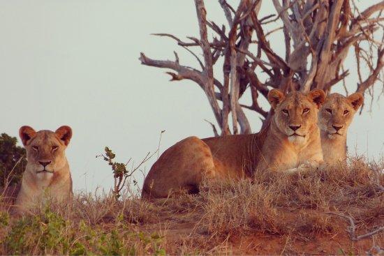 Tsavo National Park East, Kenia: photo4.jpg