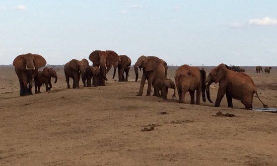 Tsavo National Park East, Kenia: photo6.jpg