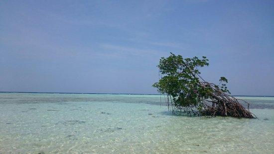 Karimun Jawa, Endonezya: DSC_0224_2_large.jpg