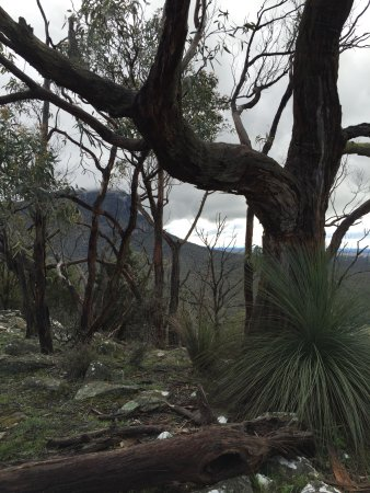 Dunkeld, Australia: Lovely surrounds, wildlife and wild flowers!