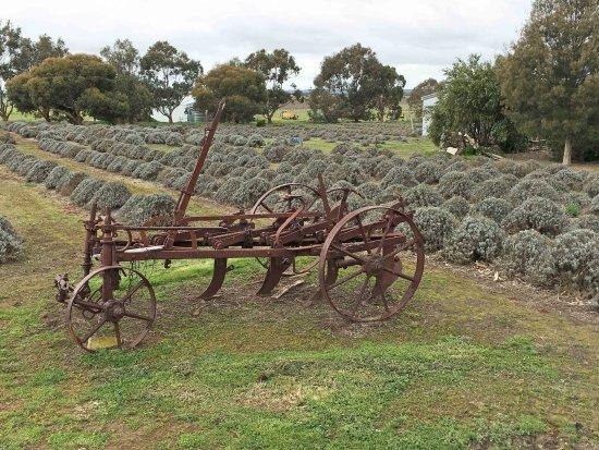 Kingscote, Australien: Farm machinery