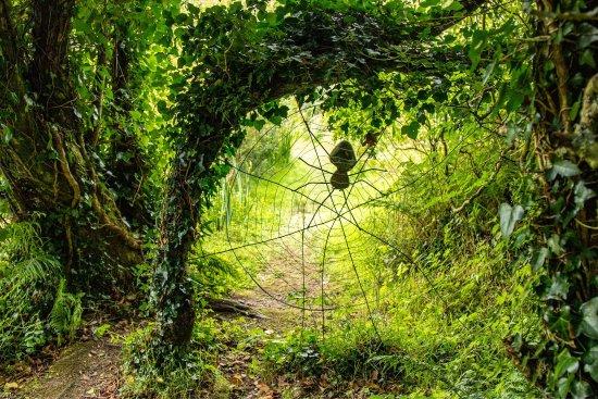 tanglewood wild garden - Wild Garden