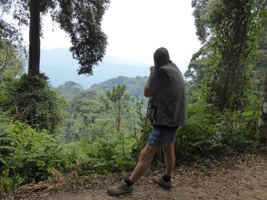 Nyungwe National Park: Views over the rainforest