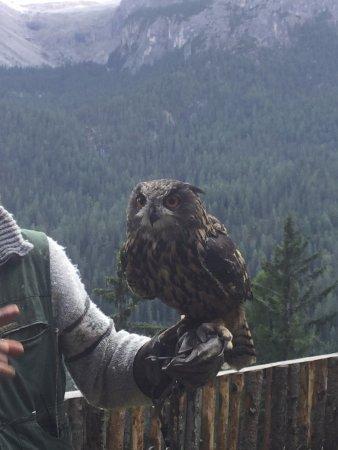 Falconeria Dolomiti: Gufo reale