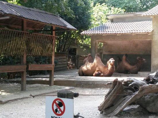Giardino Zoologico Di Pistoia Foto Di Giardino Zoologico