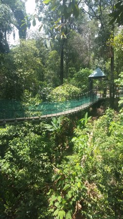 KL Forest Eco Park Canopy Walk & Canopy Walk - Picture of KL Forest Eco Park Kuala Lumpur ...