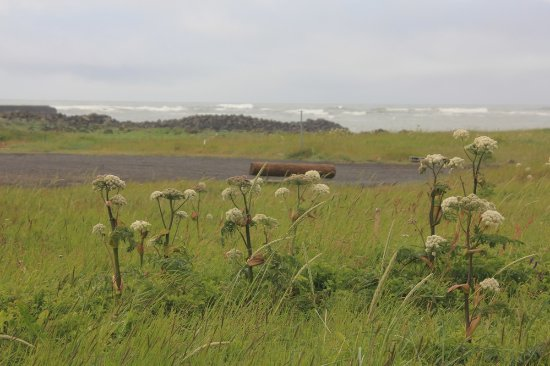Eyrarbakki, IJsland: Where birds fly freely