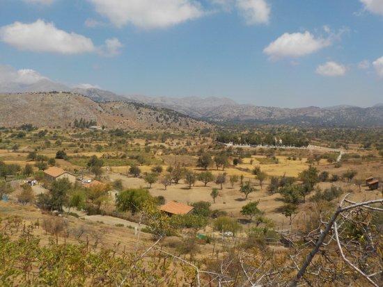 Lasithi Mesa, Grecia: Blick auf die Weinreben des Eco-Parks und auf Teile der Hochebene