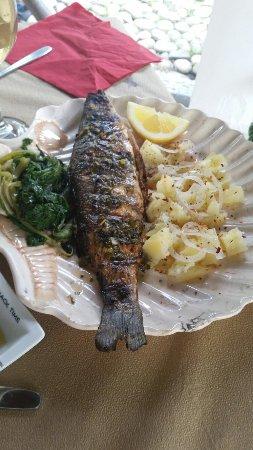 Vavilas Fish Taverna: Fisch frisch gefangen
