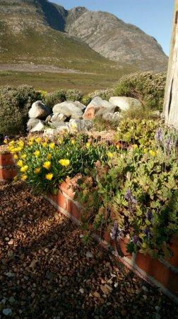 Pringle Bay, Afrika Selatan: Fynbos and fragrant flowers, views, views, views