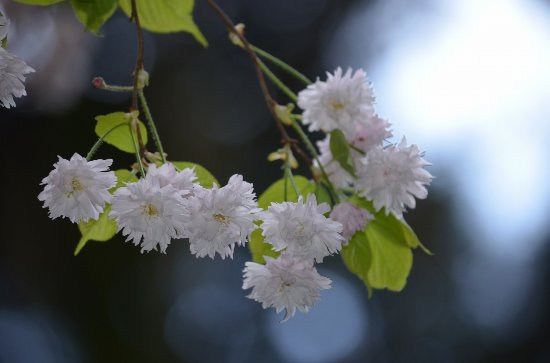 Nyuzen-machi Foto