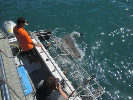 Big Shark, Mossel Bay