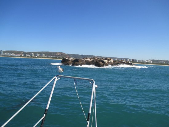 Mossel Bay, Sudáfrica: Seal Island from the boat
