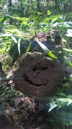 Monteverde Cloud Forest Reserve, Costa Rica: 20160913_124711_large.jpg