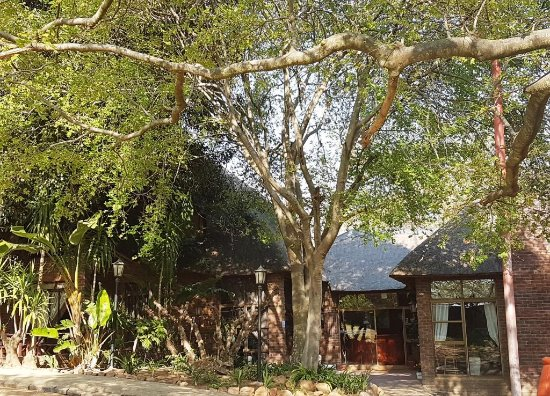 North Riding, Sudafrica: Spring has sprung in the gardens