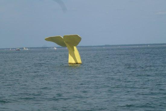 Union des Bateliers Arcachonnais: Queue de baleine à Arcachon sculptée et dont on change la couleur tous les ans
