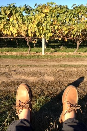 North Fork Wine Tours : Lounging in the vineyards