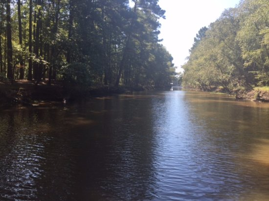 Captain Ron's Gator Park, Petting Zoo and Botanical Gardens: Beautiful Caddo Lake