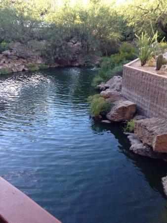 Loews Ventana Canyon Resort: photo6.jpg