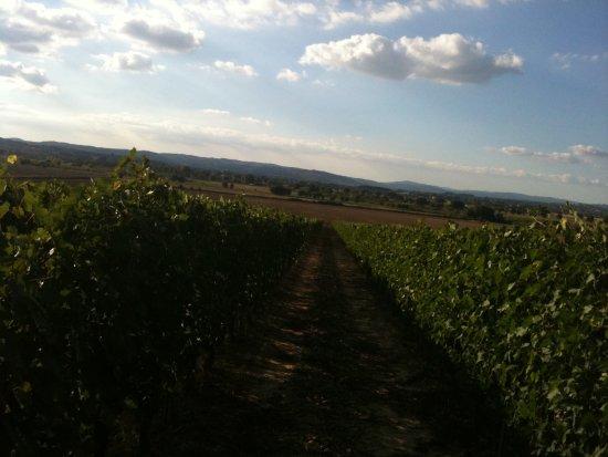 Bilde fra Abbadia di Montepulciano