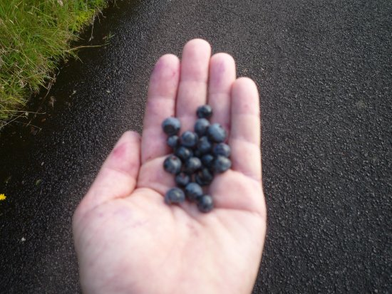 Dungiven, UK: fruits