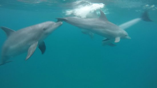 Ponta do Ouro, Mozambik: Dolphin Encountours Research Center