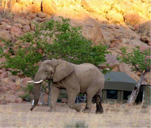 Khorixas, Namibia: our regular visitors