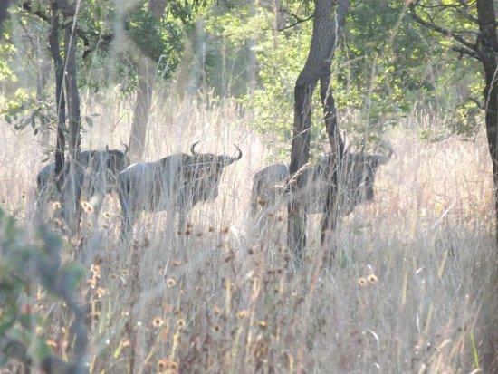 Kuti Wildlife Reserve: animals really tame and photogenic!