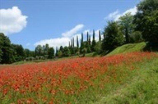 Monteleone d'Orvieto, Italien: Relais gli Ulivi