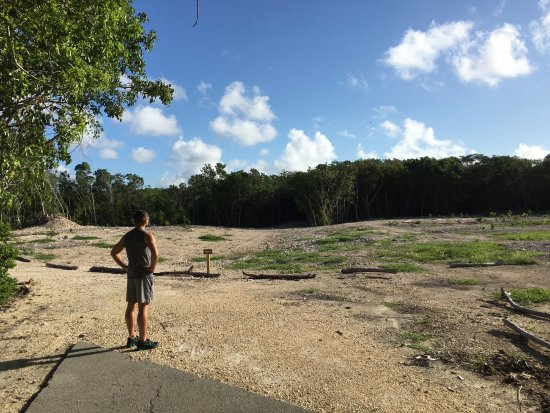 Key Largo Hammocks State Botanical Site : New trees planted where they tore down old buildings.