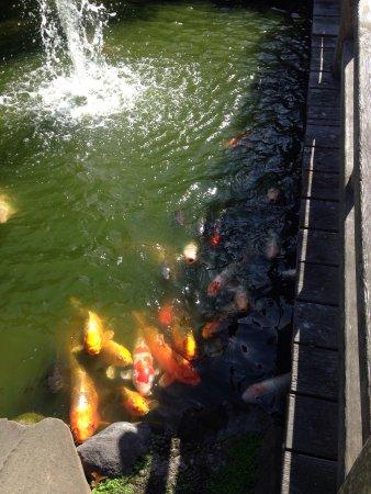 San Mateo, CA: Pond