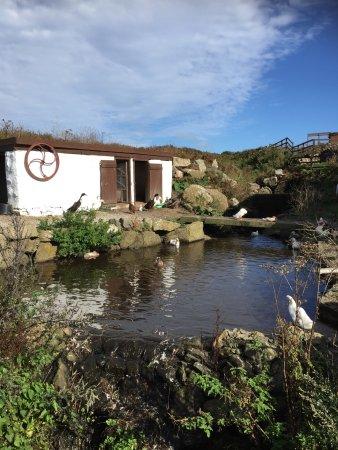 Λαντς Εντ, UK: Greeb Farm